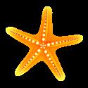 Starfish for ALT Insurance Group